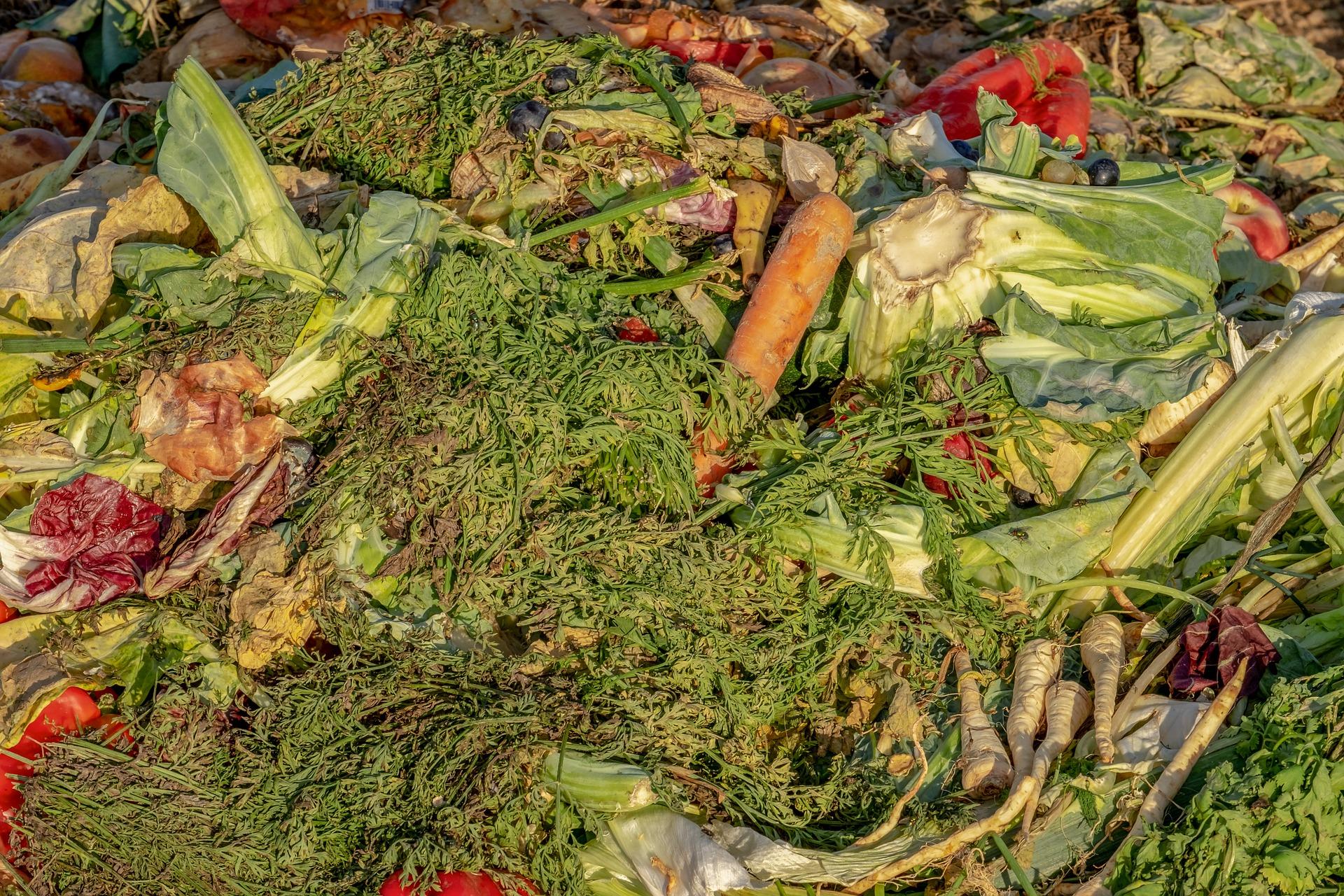 Compost en región de Los Lagos